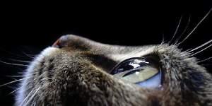 Il fascino del gatto - Immagine tratta dal web
