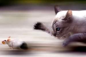 L'utilità dei gatti nella lotta contro i topi - Immagine tratta dal web